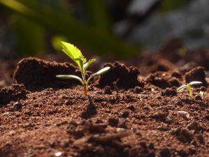 idées, semences, permaentreprise